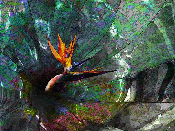 abstract colors & bird of paradise4!